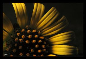 Domestic sun  II by cesalv