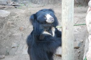 Sloth Bear 01 by ManitouWolf