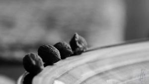 Olive Stones by AfricanObserver