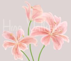Flower Practice - Lilies by HinaValliere
