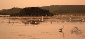 Reflected Flock by abentco