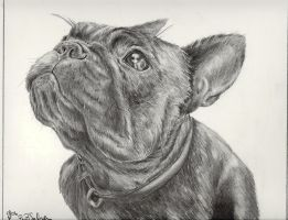 french bulldog 2 by Preita