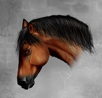 Spanish horse by Alexis-art