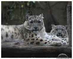 Mum and cub by TVD-Photography