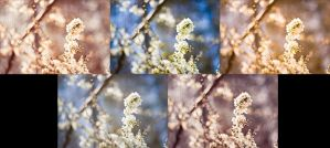 Spring presets for photoshop by chupla