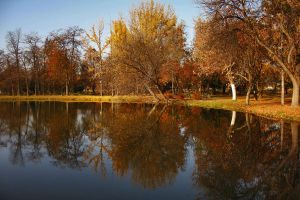 Skopje City Park - Reflection by dardaniM