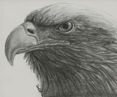 Eagle by Tir-Goldeness