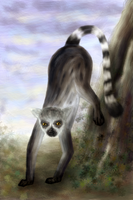 Ring-tailed Lemur by dwsel