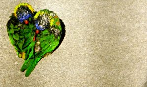 heart of lorikeets by your-friendly-nukes
