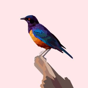 Hildebrandt's starling by miscellaneouswinni