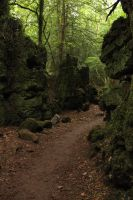 Puzzlewood 21 by Tasastock