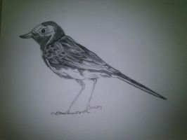 Bird Observation Drawing by SkyChow