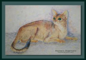abyssinian cat by Stasushka