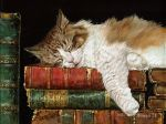 book cat by Animal75Artist
