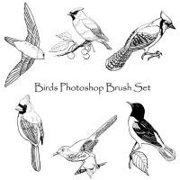 Birds Photoshop Brush Set by PhoenixWildfire