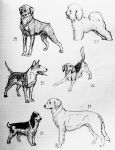 The Dog Collection IV by Spirit-Of-Alaska