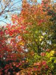 Autumn Leaves I by dolphinandcow