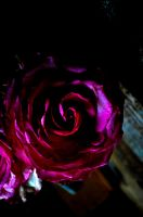 rose spiral by ZappaArt