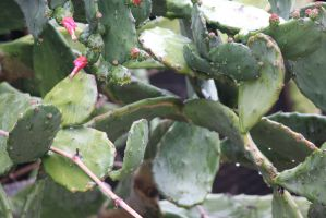 00123 - Wet Cactus by emstock