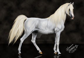 Arabian horse by SynligSprinkler