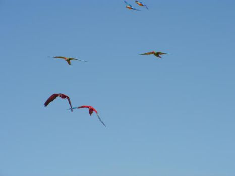 Parrots in flight by Numb1984
