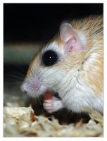 Yum Yum - PallidGerbil Version by JennyTangen