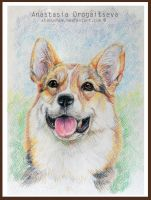 welsh corgi portrait by Stasushka