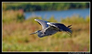 Heron Glyde Past by andy-j-s