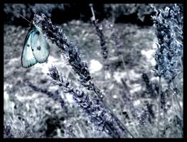 madame Butterfly. by Singul