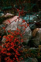 On the Encroachment of Nature by JANunnoArt