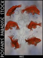 Animals 096 Pacific Rockfish by poserfan-stock