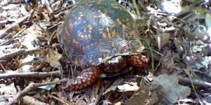 Turtle in the Front Yard by GothNebula