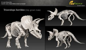 Triceratops horridus 3D skeleton by EoFauna