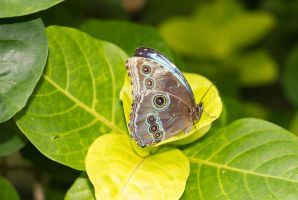 Butterfly_MG_8659 by creative1978