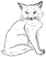 Norweigan Forest Cat Sketch by thefireflii