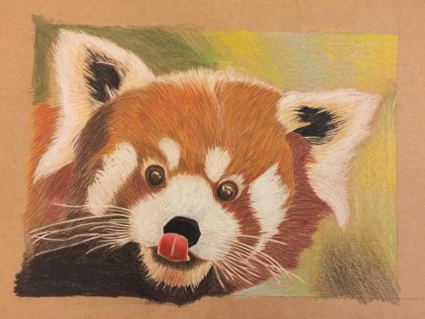 Roter Panda Zeichnung/ pencil drawing by Ela0104