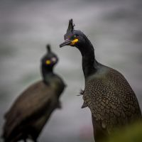 inquisitive shag by lesterlester
