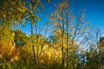 Autumn Reflections by Sulde