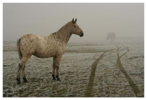 Cold morning 8 by salviphoto
