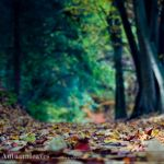 Autumnleaves by Delphic-Wolf