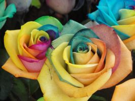 Colourful Roses Series by SAOstrich