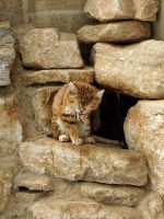 Sand Cat by quinnypin