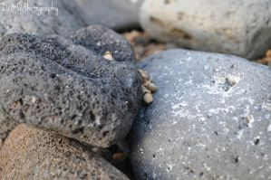 Caught Between a Rock in a Hard Place by AllAboutDianne