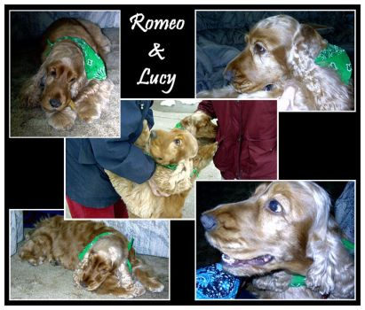 Lucy and Romeo by sweetkitten