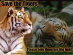 Save the Tigers by RavenClaws666