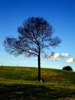 Lonely Tree by JenJenWalksInTheRain