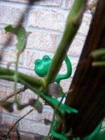 Peeping tree Frog by paintresseye
