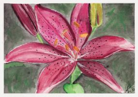 Asiatic Lily by KerovinBlack