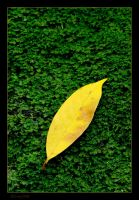 Yellow Leaf by Gil-Levy