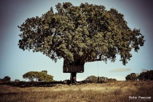 Tree House by RutePascoal